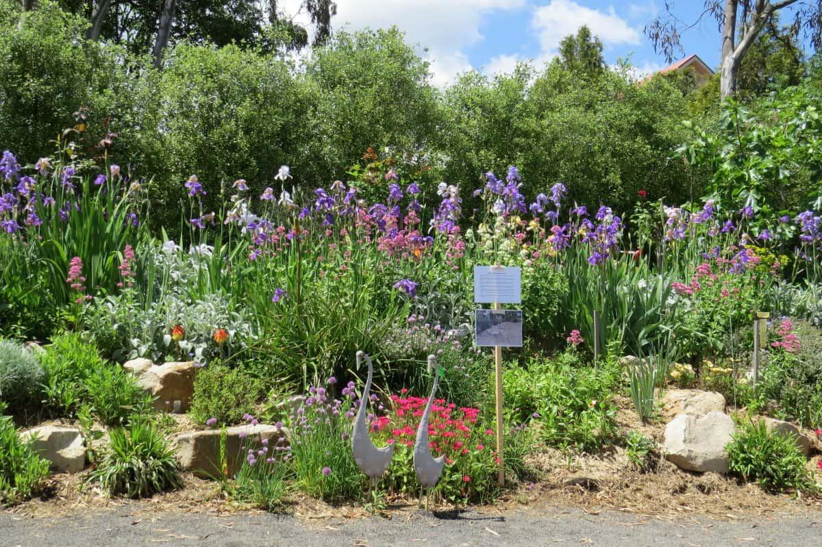 "Superb Iris' display at Leanne McCready & Allan Bull's property ""Alle'e de Villeneuve'  Alexandra"
