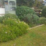 Wallis garden 4
