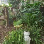 Wallis garden1