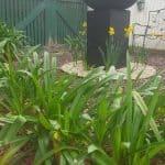 Wallis garden2