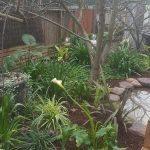 Wallis garden6
